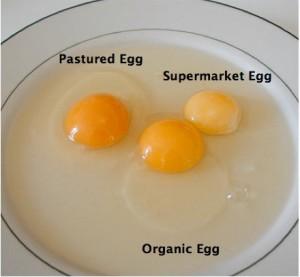 Eggs-1-300x277